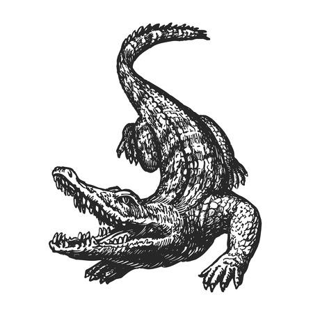 Hand getekend boos krokodil met open mond, schets. Croc, gigantische alligator, gator vectorillustratie