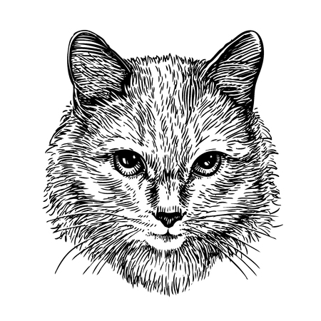 likable: Hand drawn portrait of cute cat, sketch. Art vector illustration