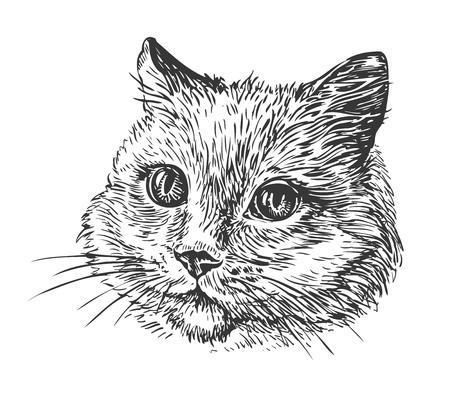 Hand-drawn portrait of cat. Sketch vector illustration 일러스트