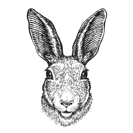 Hand-drawn portrait of rabbit. Easter bunny, sketch. Vector illustration  イラスト・ベクター素材