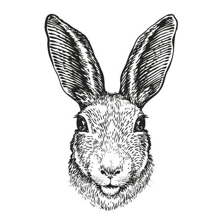Hand-drawn portrait of rabbit. Easter bunny, sketch. Vector illustration Illustration