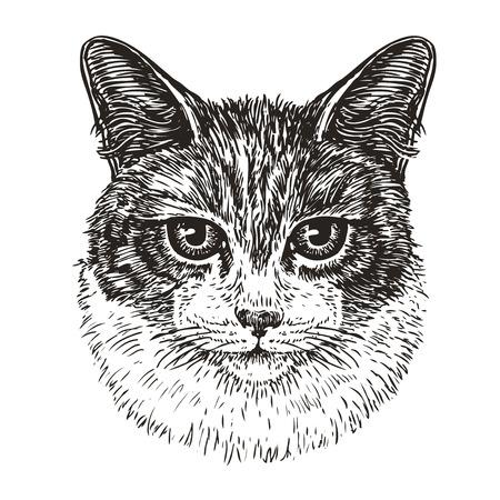 catling: Drawn portrait of cute cat. Animal, kitty, pet sketch. Vintage vector illustration Illustration