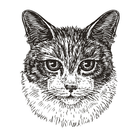 Drawn portrait of cute cat. Animal, kitty, pet sketch. Vintage vector illustration Illustration