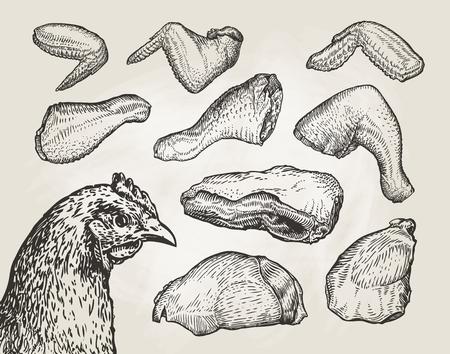 pet breeding: Hand drawn cuts, chicken meat. Butcher shop sketch. Vintage vector illustration