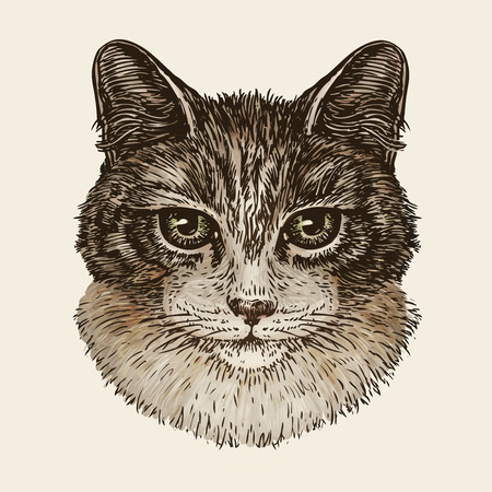 Drawn portrait of cute kitten. Cat, animal, pet sketch. Vector illustration