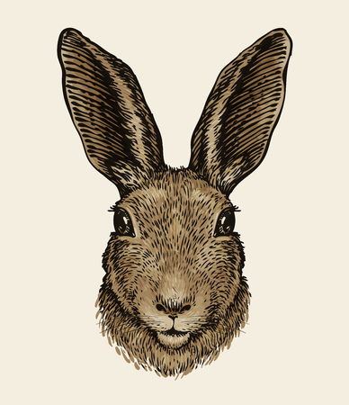 Easter bunny. Portrait of hare, sketch. Vintage vector illustration Illusztráció