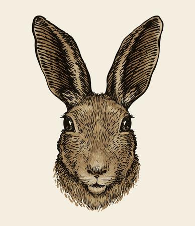 Easter bunny. Portrait of hare, sketch. Vintage vector illustration Illustration