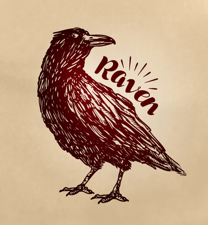 scavenger: Vintage drawn raven. Crow, bird sketch. Vector illustration