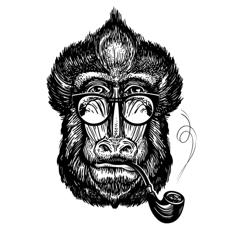 Hand-drawn portrait of funny monkey with glasses. Smart mandrill and smoking pipe. Sketch vector illustration Illustration