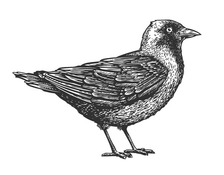 Hand-drawn bird. Animal sketch. Vector illustration