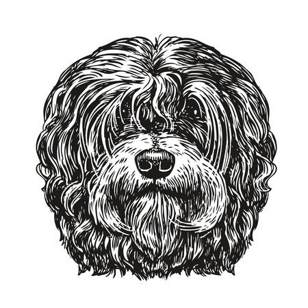 whelps: Hand drawn portrait lapdog. Dog, pet, animal sketch. Vintage vector illustration Illustration
