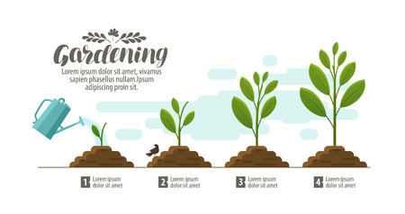 Growing plant. gardening, horticulture infographic. Agriculture, farming development, nature, sprout concept. Vector illustration