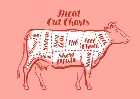 Cow, beef, meat cuts. Scheme or diagrams for butcher shop. Vector illustration