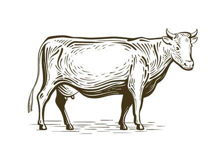 Farm animal, cow standing, sketch. Dairy farm, vintage vector illustration Stock Photo