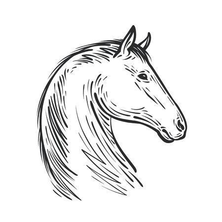 Horse sketch. Illustration