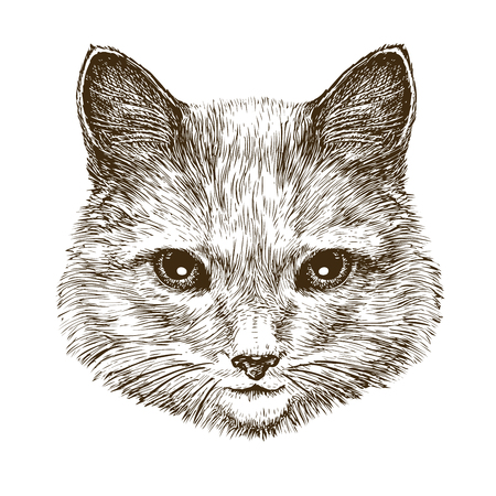 portrait of a cute kitten. cat, pet animal sketch. vintage vector illustration isolated on white background
