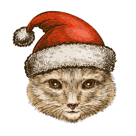 Kitty, cat in santa claus hat. Christmas, celebration concept.
