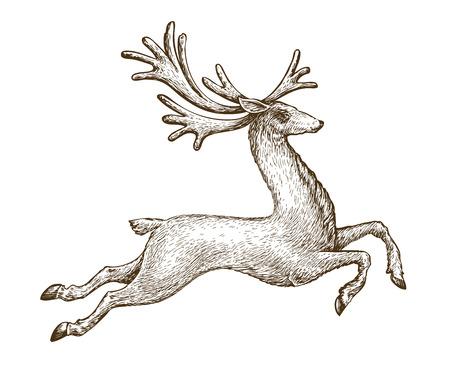 Running deer. Drawn vintage sketch