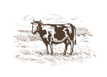 Cow grazing in the meadow. Illustration