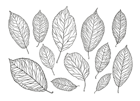hand drawn tree leaves. nature, foliage sketch. decorative vector illustration isolated on white background