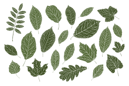 set of decorative leaves. nature, summer concept. vector illustration isolated on white background