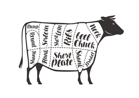 Cuts of beef, cow or bull. Butcher shop, meat vector