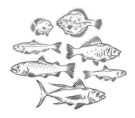 Various fish set. Seafood, fishing sketch