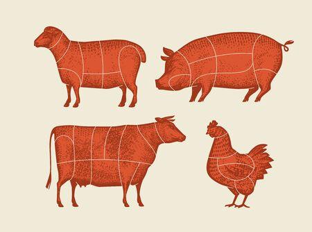 Animaux de la ferme avec des lignes de coupe de viande. Illustration vectorielle rétro