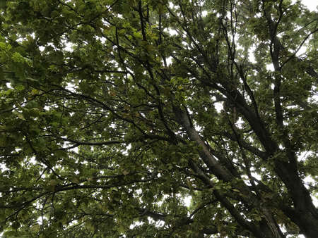 Upward view of tree with many branches and leaves