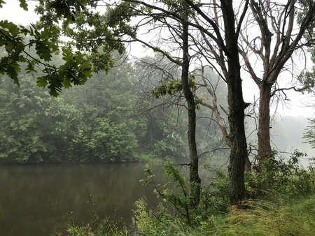 Morning fog on wild forest lake. Environment
