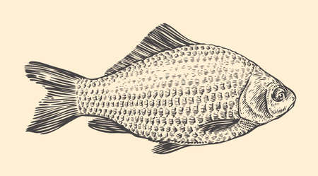 Fish hand drawn sketch. Vintage vector illustration
