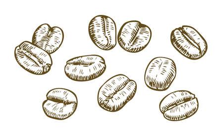 Coffee beans sketch. Drink vintage vector illustration
