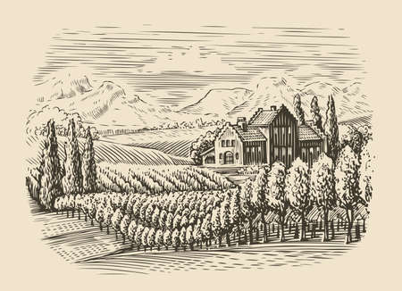 Vineyard landscape. Hand drawn sketch vector illustration