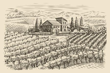Vineyard landscape sketch. Hand drawn vintage vector illustration