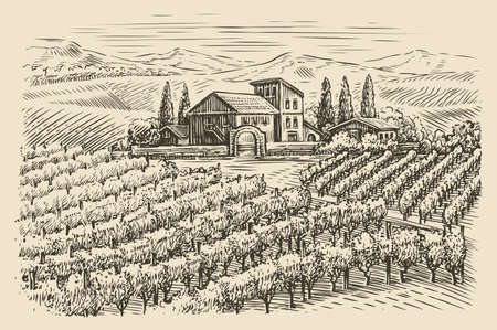 Vineyard landscape sketch. Hand drawn vintage vector illustration 向量圖像
