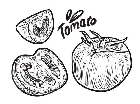 Tomato and slice. Vegetables sketch vector illustration