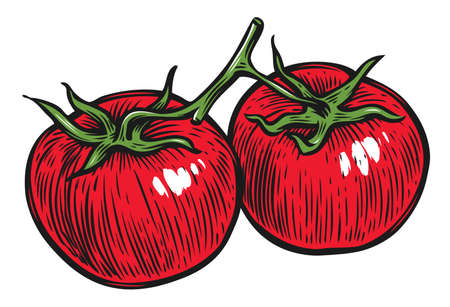 Two tomatoes on a branch. Vegetables vector illustration 向量圖像