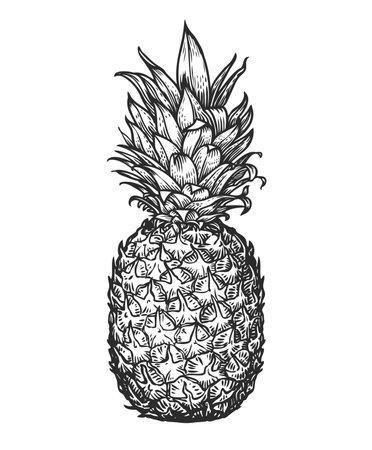 Whole pineapple. Tropical fruit, food sketch vector illustration 向量圖像