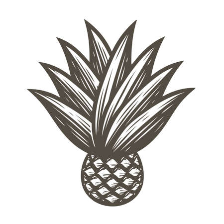 Agave with leaves symbol. Tequila ingredient vector illustration