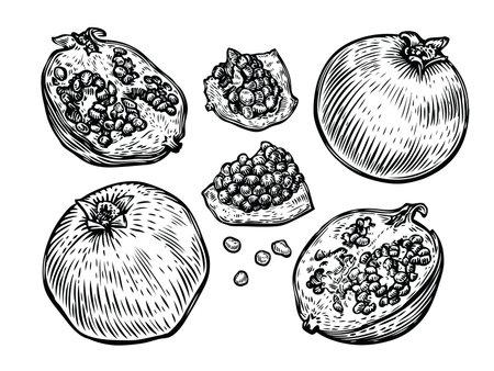 Pomegranate fruit set. Food sketch vector illustration