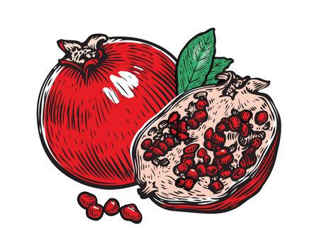 Pomegranate fruit vector. Whole, half fruit and garnet seed grain