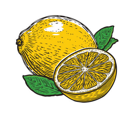 Lemon with leaves. Organic nutrition healthy food. Fruit vector