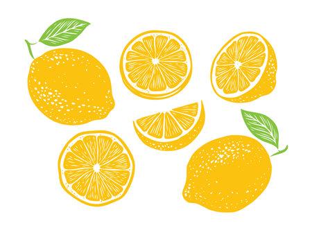 Fresh lemon fruits, collection of vector illustration