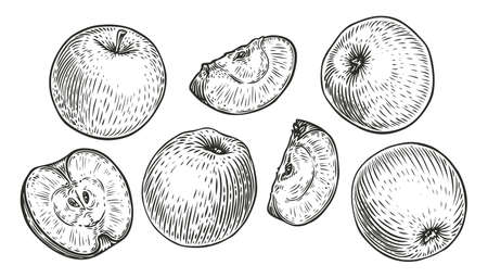 Apple fruit set. Engraved organic food hand drawn sketch engraving vector