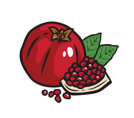 Whole pomegranate with half, leaves isolated on white background. Vector illustration