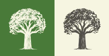 Tree oak in vintage engraving style. Nature symbol vector illustration