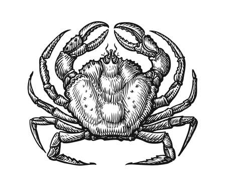 Crab with claws sketch illustration in vintage engraving style. Seafood hand drawn vector