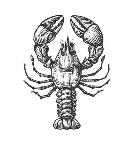 Drawing of lobster for menu or label. Seafood in vintage engraving style. Sketch vector illustration Ilustrace