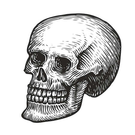 Human skull with a lower jaw. Hand drawn vector illustration in vintage engraving style Vettoriali