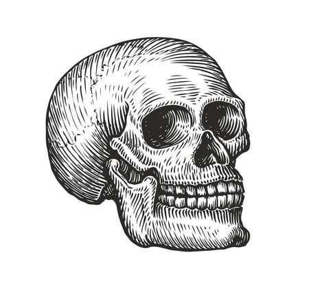 Human skull in vintage gothic style. Engraving sketch vector illustration